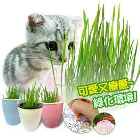 超療癒首創著色貓草盆栽