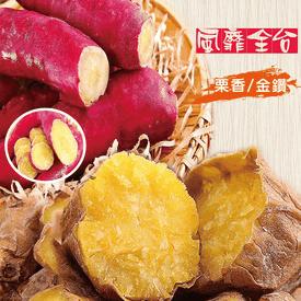 美味健康栗香/金鑽地瓜