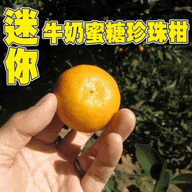 超迷你蜜糖牛奶珍珠柑